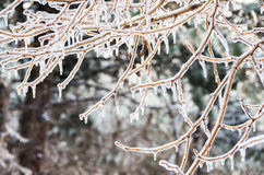 Winter. Icing. Icy trees and shrubs, winter stock images