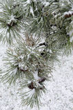 Winter. Icing. Icy trees and shrubs, winter royalty free stock image