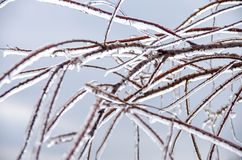 Winter. Icing. Icy trees and shrubs, winter stock image