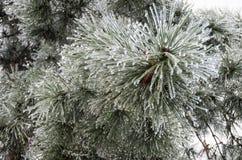 Winter. Icing. stock photo