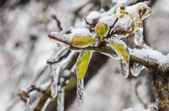 Winter. Icing. Icy trees and shrubs, winter royalty free stock photo