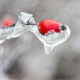 Winter. Icing. Royalty Free Stock Photos