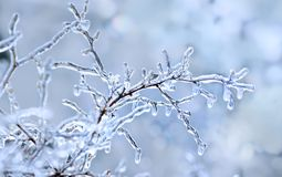 Free Winter Icy Branch. Winter Background Royalty Free Stock Photo - 132643105