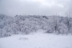 Winter icy forest Stock Photo