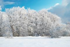 Winter icy forest Stock Images