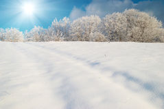Winter icy forest Stock Photography