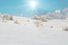 Winter icy forest Royalty Free Stock Image