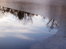 Winter Icy Pond With Tree Reflections Royalty Free Stock Photography