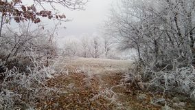 Winter idyll. Beautiful landscapes Serbian forests in winter idyll Royalty Free Stock Photo