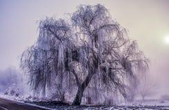 Winter idyll. Beautiful wood-covered snow royalty free stock photo