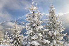 Winter idyll Royalty Free Stock Images
