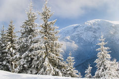 Winter idyll Royalty Free Stock Photography