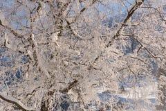 Winter idyll Royalty Free Stock Image