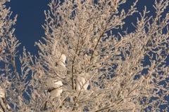 Winter idyll Stock Images