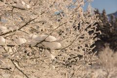 Winter idyll Royalty Free Stock Photography