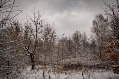 Winter idyllic winter landscape with trees and with fresh snow stock images