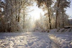 Winter II. Trees in snowy garden Stock Photography