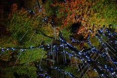 Winter Illuminations. Tree decoration on Winter Illuminations light festival in Tokyo Midtown 2017 Royalty Free Stock Photos