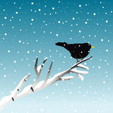 Winter illustration with blackbird on branch Stock Photography