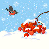 Winter illustration with a branch of rowan and bird Stock Photography