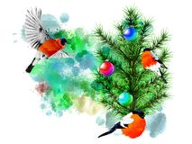 Winter illustration with bullfinches on an abstract watercolor background. Royalty Free Stock Images