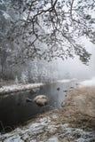 Winter im Berg lizenzfreie stockfotos