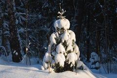 Winter im firest Lizenzfreies Stockbild