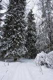 Winter im firest Stockbilder