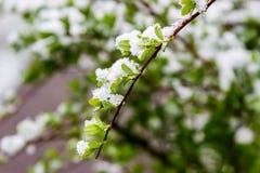 Winter im Frühjahr im Mai 2017 Weißrussland Lizenzfreie Stockbilder