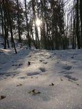 Winter im Holz stockfotografie