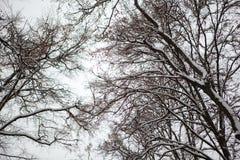 Winter im Park lizenzfreies stockfoto