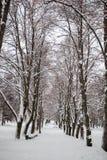 Winter im Park stockbilder