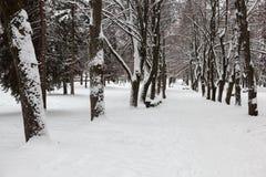 Winter im Park stockbild