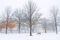 Winter im Park Lizenzfreie Stockfotografie