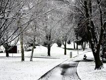 Winter im Park Stockfotografie