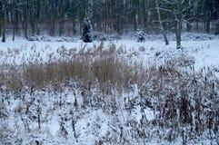 Winter im Park Stockfoto
