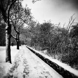 Winter im Park Künstlerischer Blick in Schwarzweiss Lizenzfreies Stockfoto