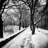 Winter im Park Künstlerischer Blick in Schwarzweiss Lizenzfreies Stockbild