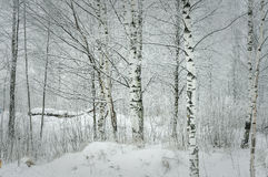 Winter im Wald Stockfoto
