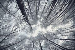 Winter im Wald Lizenzfreies Stockfoto