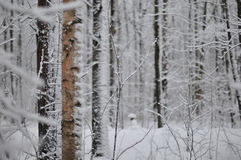 Winter im Wald Stockfotos