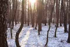 Winter im Wald Stockfotos