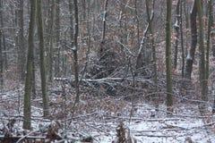 Winter im Wald Lizenzfreie Stockfotografie