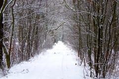 Winter im Wald Stockfotografie