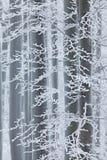 Winter im Wald, Bäume mit Raureif Kalter Winter mit Eis auf Baumweißen in Europa, Deutschland Winterholz, weiße Waldlandschaft lizenzfreies stockfoto