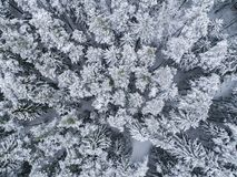 Winter im Wald - Brummenfoto von eisigen Bäumen stockfotos