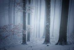 Winter im Wald mit Nebel und Schnee Lizenzfreie Stockfotos