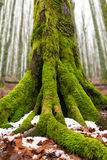Winter im Wald Toskaneres Lizenzfreie Stockfotografie