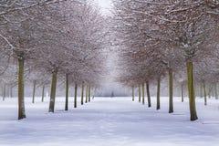 Winter im Wald und zwei Leute Lizenzfreie Stockfotos