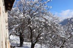 Winter im Yard lizenzfreies stockfoto